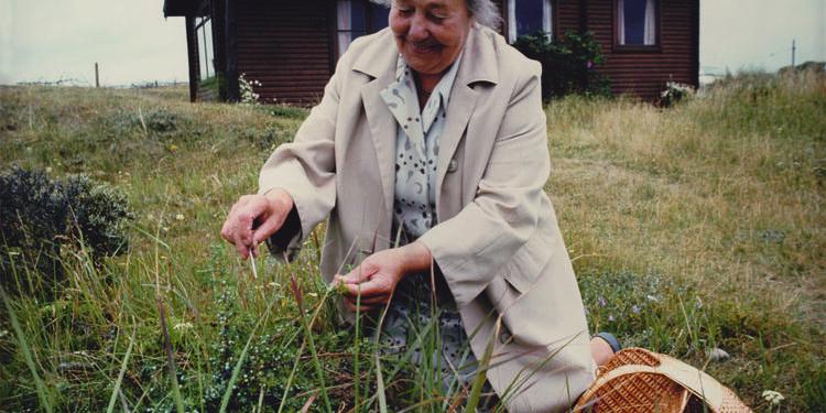 Signe Hansen på jagt efter urter til bjesk i omegnen af Hirtshals.
