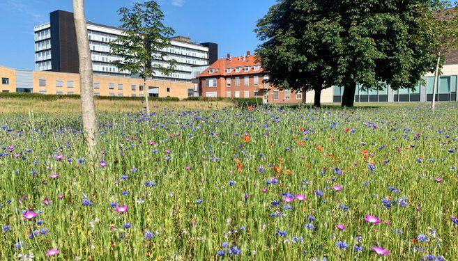 Sygehus Hospital Blomster Vild 657x493